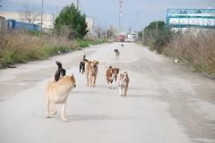 Un albo per veterinari per consentire servizio di primo soccorso ad animali randagi