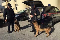 Operazione straordinaria dei Carabinieri di Trani, quattro denunce ed un arresto per armi e droga