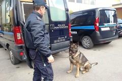 Al lavoro con la droga, arrestato un agente di Polizia Penitenziaria