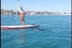 Matinelle, un delfino gioca tra i bagnanti