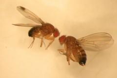 Allarme insetti in Puglia, Coldiretti: «Strage nei nostri campi»