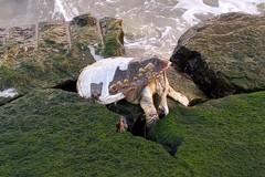 Lungomare Cristoforo Colombo, ritrovata un'altra tartaruga senza vita