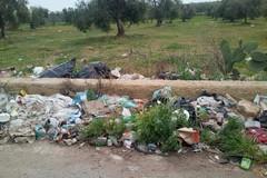 Rifiuti abbandonati sulla Trani-Corato, interviene la Provincia