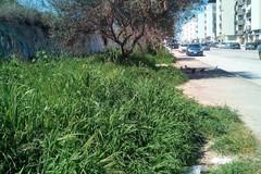 Scarsa manutenzione del verde pubblico, Italia in Comune accende i riflettori sulla tematica