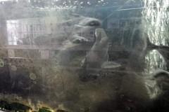 Acque torbide per l'acquario della Villa comunale di Trani