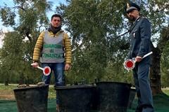 Sventato furto nelle campagne di Trani, recuperati 10 quintali di raccolto