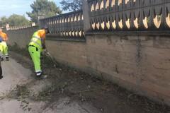Lavori di bonifica a Trani, radicale pulizia nei pressi del centro Jobel