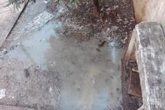Olio per frittura nella pineta di via Andria, la denuncia del comitato di quartiere