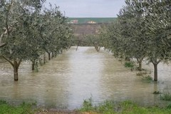 Maltempo, il Puglia 2 milioni di danni: duramente colpita anche la Bat