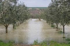 Vento gelido e piogge torrenziali devastano i campi, è calamità in Puglia