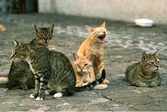 Colonie feline, il Comune di Trani invita al rispetto delle regole civili