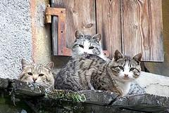 Tremila euro per curare un gatto moribondo, la consigliera Merra risponde alle critiche