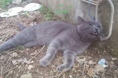 Ancora maltrattamenti sugli animali: una gatta bastonata in un giardino condominiale