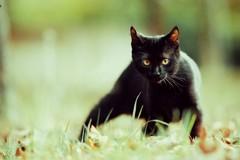 Halloween all'insegna della tutela dei gatti neri