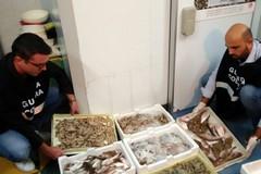 Sequestrati circa 500 kg di prodotto ittico nella provincia Bat