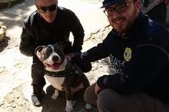 Cani in Villa comunale, ieri anche i controlli delle guardie zoofile