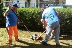 Manutenzione in città, ripulita la pinetina di via Andria