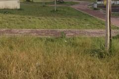 Parco di via Polonia dimenticato, l'area verde è già trascurata
