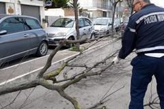 Maltempo e raffiche di vento, disagi in cittá: caduti alberi e pali