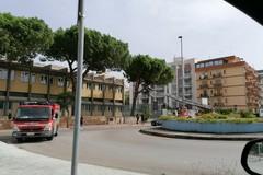 Si spezza un grosso ramo nel cortile della scuola Baldassarre: traffico rallentato