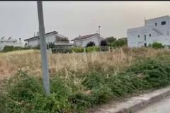 Rischio incendi, Centrone: «Nonostante l'ordinanza, la situazione in città è tutt'altro che fuori pericolo»