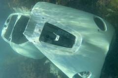 """Una """"vespa sottomarina"""" avvistata nel fondale di Trani: ma è solo un rottame"""