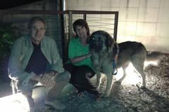 Ritrovato Wolf, il cane smarrito 24ore fa