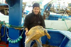 "Un'altra tartaruga salvata dal ""Poseidon"""