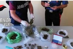 Detenzione e spaccio di sostanze stupefacenti, arrestato un 44enne tranese