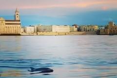 Un delfino nelle acque di Trani: il video fa il giro del web
