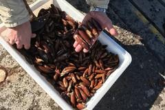 Porto di Trani, sequestrati 5 chili di datteri di mare
