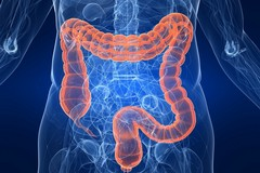 Alla scoperta dei batteri intestinali