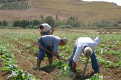 Agricoltura, stop idrico sancito dalla delibera del Consorzio Bonifica Terre d'Apulia