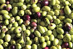 Fase 2 in Puglia: magazzini pieni di 70 milioni di litri di olio extravergine