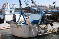 Maxi sequestro di pesce sul porto di Trani