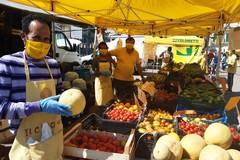 Agricoltura in Puglia, crac ciliegie perso fino all'80% del raccolto