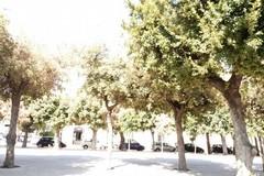 """""""Com'era verde quella piazza"""": ora alberi secchi e crescita selvaggia in piazza della Repubblica"""