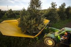 Agricoltura, persi 100 giorni di lavoro annui a causa della burocrazia