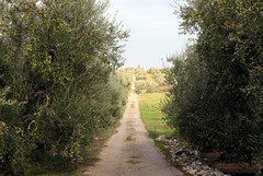 Riqualificazione della viabilità rurale, dal Gal nuovo finanziamento per Trani
