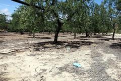 Emergenza criminalità nelle campagne della Puglia