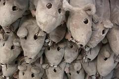 Stop a topi e blatte, l'Amiu inizierà la disinfestazione