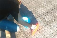 Trappole per topi: una cittadina rimuove il topicida dal marciapiede