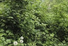 Xylella fastidiosa, in corso l'ispezione delle piante tranesi