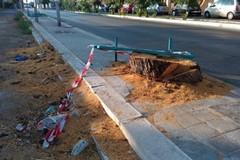 Verde pubblico, dopo il taglio di alberi secolari Pro Natura chiede spiegazioni