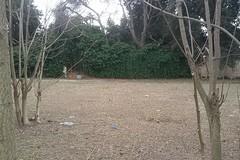 Un'area attrezzata per cani a Villa Telesio: la proposta di De Simola