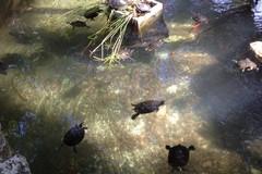 Villa comunale, la vasca delle tartarughe regno di degrado e sporcizia