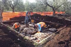 Dalla tragedia al capolavoro, ecco la scoperta di alcuni archeologi tranesi