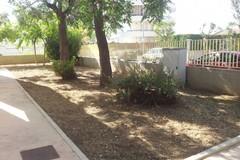Ritorna a splendere il giardino della scuola Fabiano