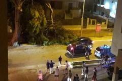 Via Malcangi, crolla un enorme ramo di pino