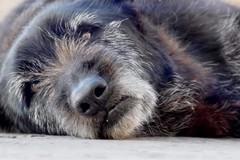 """Trani dice addio al """"simbolo"""" del randagismo locale: è morto il cane Nerone"""
